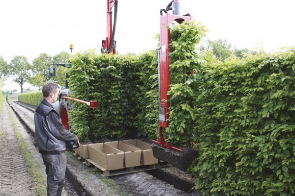 Siepi Da Giardino Prezzi : Siepi a pronto effetto di grandi dimensioni fino a cm