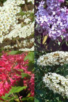 Siepe per farfalle e insetti contenitore 30-60 cm