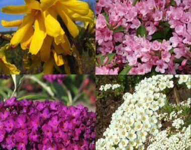 Siepe fiorita alta 1