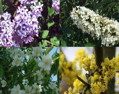 Siepe fiorita alta 2