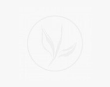 Lauroceraso 'Genolia'® Contenitore 50-60 cm