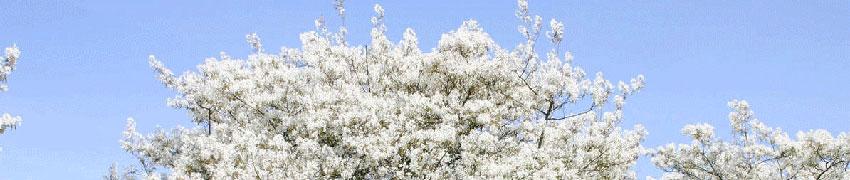 Ordinare le piante da siepe a foglia caduca