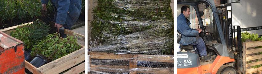 Preparazione delle piante in contenitore<